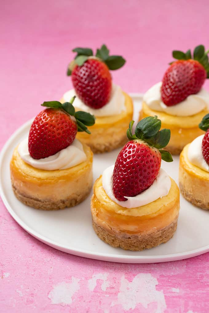 A plate of mini Vanilla Cheesecakes on a pink background