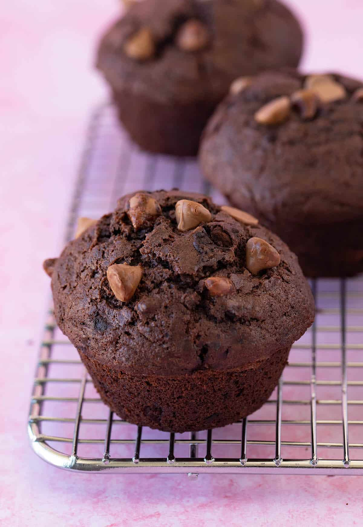 Bakery style chocolate muffins sitting on a cooling rack.